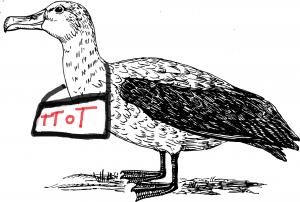 bird-47763